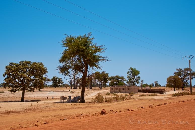 ©ksztaba_africa_13-03-20_DSCF3632