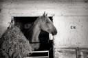 © osztaba_horseracing_20120721_DSCF4583-Edit-2