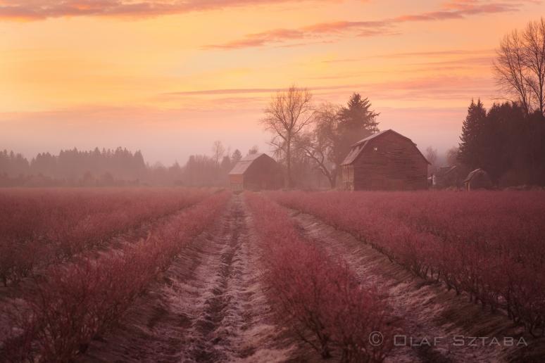 ©osztaba_pitt_meadows_ID_20130121__DSF1569