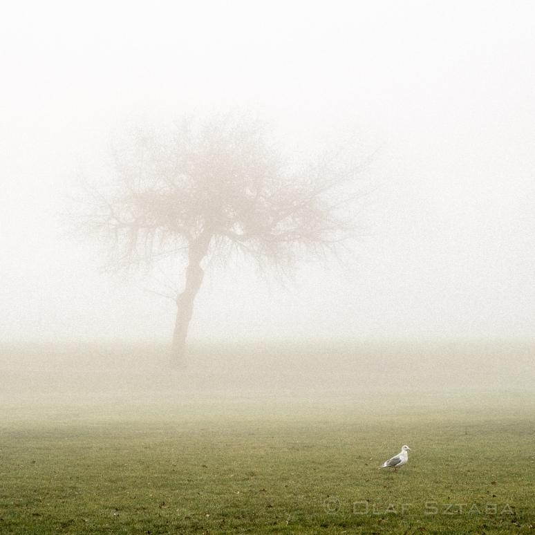 ©osztaba_fog_20150114__DSF3408